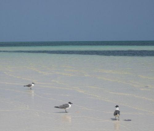 BahamasBirds