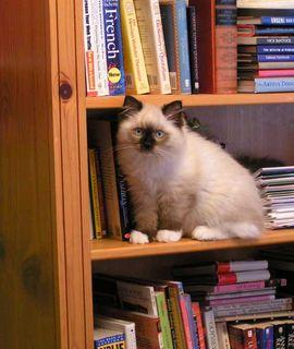 Bruno_on_bookshelf