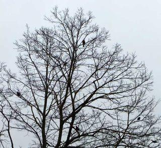 NewArtChallenge_BirdInATree