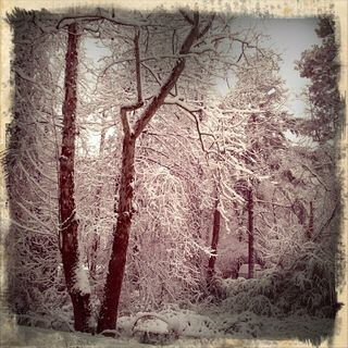 JodiOhl_snow