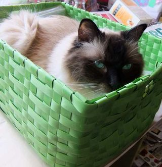 BrunoGreenBasket