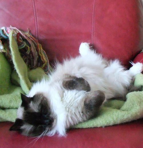 Bruno gets comfy!
