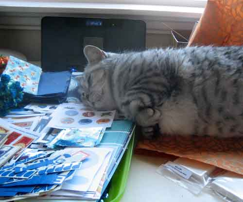 Inca curled up with my collage sheets