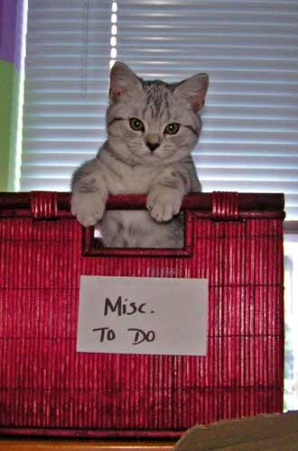 """Cute Inca the Kitten in my """"to do"""" bin"""
